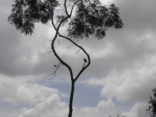 bird-on-tree.jpg